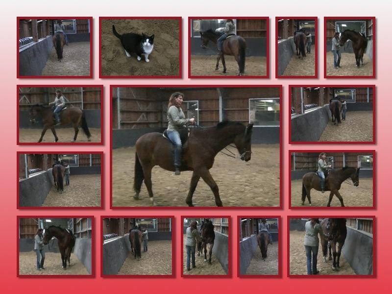 trainen achterhand paard